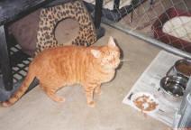 Gus2004
